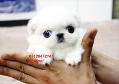 buy-sell entertainment-sports pets فروش سگ درانواع نژادها