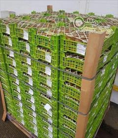 industry packaging-printing-advertising packaging-printing-advertising نبشی بسته بندی، نبشی بسته بندی میوه صادراتی