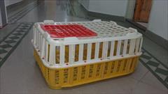 industry packaging-printing-advertising packaging-printing-advertising قفس پلاستیکی جهت حمل مرغ