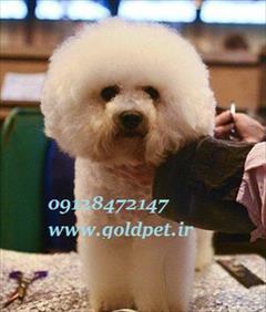 buy-sell entertainment-sports pets آرایشگاه حیوانات