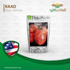 industry agriculture agriculture  فروش بذر گوجه فرنگی رعد.قیمت بذر گوجه فرنگی رعد