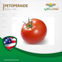 industry agriculture agriculture  فروش بذر گوجه فرنگی پتو پراید.قیمت بذر گوجه فرنگی