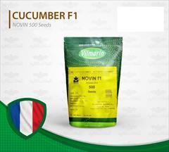 industry agriculture agriculture فروش بذر خیار گلخانه ای نوین مخصوص هوای سرد