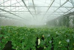 industry agriculture agriculture طراحی و اجرا سیستم آبیاری تحت فشار گلخانه ای