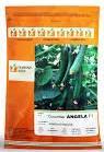 industry agriculture agriculture فروش بذر خیار گلخانه زودرس آنجلا
