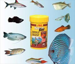 industry livestock-fish-poultry livestock-fish-poultry  فروش ماهی زینتی ,  فروش ماهی آکواریوم اصفهان
