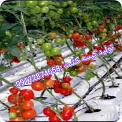industry agriculture agriculture تولید نایلون گروبگ کشاورزی09122874658