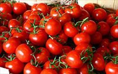industry agriculture agriculture فروش بذر گوجه فرنگی رقم باسیمو