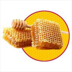 industry food food فروش عمده عسل ، فروش عمده ادویه جات ، فروش خشکبار