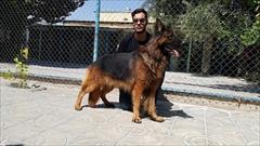 buy-sell entertainment-sports pets سگ های مولد اصیل فروشی