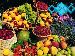 services business business بازرگانی فودوکو ( صادرات انواع میوه جات )