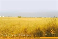 real-estate land-for-sale land-for-sale فروش زمین 500 متری در فرح آباد ساری