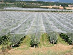 industry agriculture agriculture  خرید توری سایبان سفید،توری محافظ گلخانه سفید