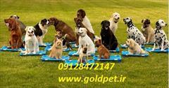 buy-sell entertainment-sports pets تربیت سگ