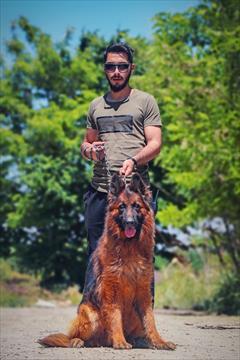 buy-sell entertainment-sports pets باشگاه سگهای پلیس