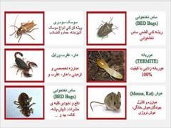 services home-services home-services سمپاشی حشرات