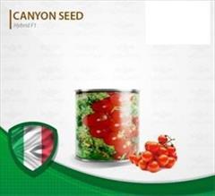 industry agriculture agriculture فروش بذر گوجه/ چری گیلاسی گلخانه ای سانتیاگو
