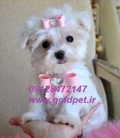 buy-sell entertainment-sports pets فروش سگ