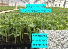 industry agriculture agriculture پرلیت مناسب کشت و پرورش بوته خیار