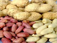 buy-sell food-drink nuts-dried-fruit فروش بادام زمینی