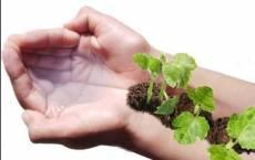 industry agriculture agriculture عرضه کود آلی و طبیعی قدرتمند با پایه آمینواسید