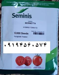 industry agriculture agriculture بذر گوجه فرنگی برنتا