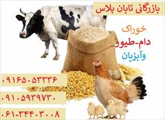industry livestock-fish-poultry livestock-fish-poultry فروش خوراک دام طیور وآبزیان