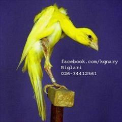 services home-services home-services کلبه قناری
