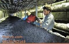 industry food food خاک پوششی قارچ ، کمپوست و خاک پوششی  مرغوب