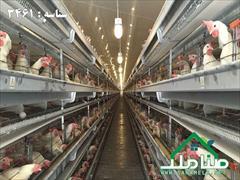 real-estate factory-stock-halls factory-stock-halls فروش 170000 متر (17 هکتار ) مرغداری در مهرچین