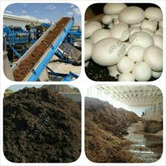 industry chemical chemical خاک پوششی - کمپوست قارچ - تجهیزات قارچ - تهیه خاک