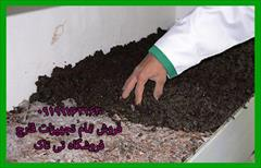 industry agriculture agriculture کمپوست قارچ و خاک قارچ و خاک پاستوریزه قارچ