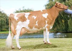 industry livestock-fish-poultry livestock-fish-poultry افزایش تولید شیر گاو با نصب سیستم مدیریت و کنترل
