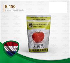 industry agriculture agriculture فروش بذر گوجه گلخانه ای بی ۴۵0 روزن سید هلند