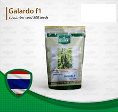 industry agriculture agriculture فروش پربارترین بذر خیار گلخانه ای گالاردو