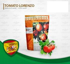 industry agriculture agriculture فروش بذر گوجه فرنگی زودرس لورنزو