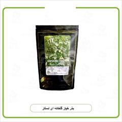 industry agriculture agriculture فروش بذر خیار گلخانه ای نستار