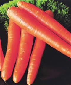 industry agriculture agriculture فروش بذر هویج نانتس.قیمت بذر نانتس
