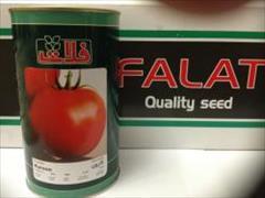 industry agriculture agriculture بذر گوجه فرنگی فلات کارون .بذر گوجه فرنگی میان رس