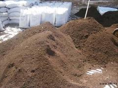 services internet internet مشاوره پرورش کرم خاکی و فروش کرم خاکی و کود ورمی ک