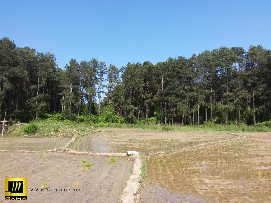 ملک فوق دارای مبایعه نامه و صلح نامه بوده که در حال حاضر توسط مالک، بخشی از زمین باغی زیر کشت برنج می باشد. به اظهار مالک برای زمین فوق اقدام به دریاف real-estate land-for-sale land-for-sale