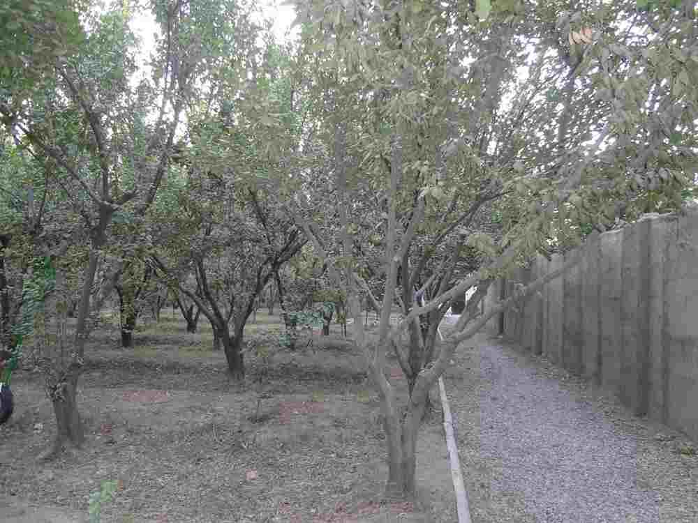 فروش 2300متر باغ مناسب ساخت در شهریارکد287<br/>2300متر باغ با انواع درختان میوه<br/>4دیوار<br/>بر بسیار مناسب<br/>مناسب جهت ساخت ویلا با مجوز<br/>سهمیه آب کشاورزی<br/>آب و بر real-estate land-for-sale land-for-sale