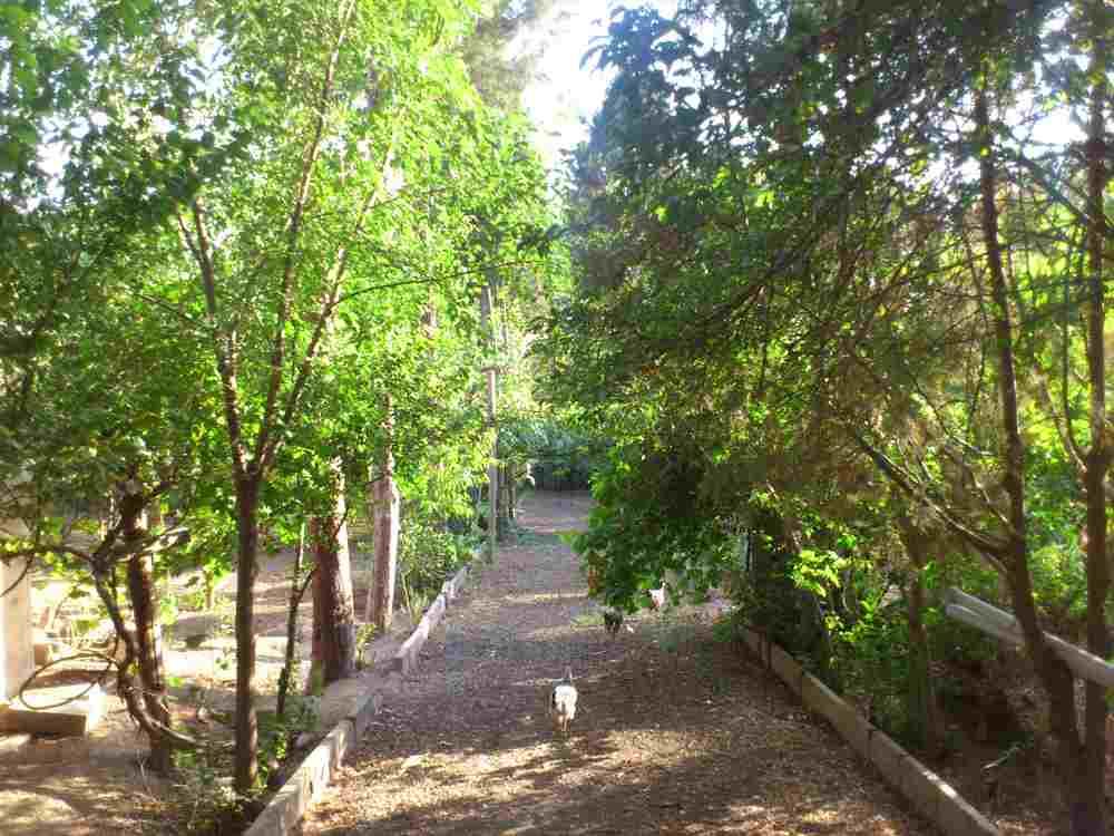 فروش 6800متر باغ سه بربا قیمتی بسیار مناسب کد258<br/>6800متر باغ میوه با 250متر بنای قدیمی و 100متر استخر در محیطی کاملا ویلایی نشین جهت فروش ارایه شده اس real-estate land-for-sale land-for-sale