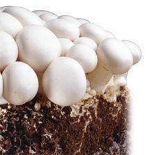 کمپوست قارچ دکمه ای بلوکه انالیز شده وخاک پوششی قارچ دکمه ای <br/>خاك پوششي و كمپوست قارچ بلوکه <br/>کمپوست ارائه شده درفروشگاه كشاروزی تی تاک به دو صورت در ا industry agriculture agriculture