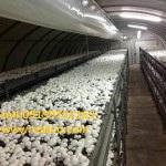 فروش کلیه مواد اولیه و تجهیزات پرورش قارچ خوراکی و سایر انواع قارچ<br/>کارخانه تولید کمپوست قارچ | تجهیزات مورد نیاز تولید کمپوست قارچ<br/><br/>پرورش قارچ یکی از  industry agriculture agriculture