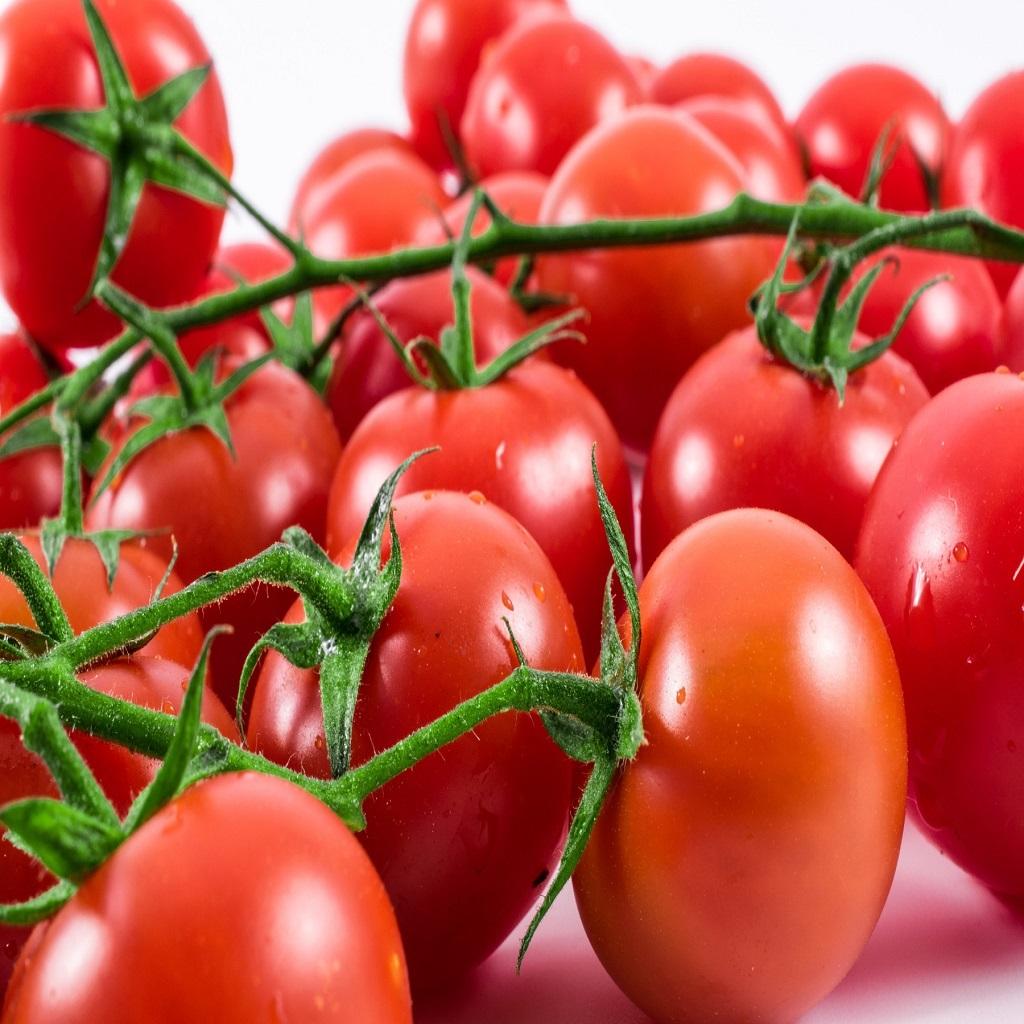 بذر گوجه مارکنی<br/>هیبرید<br/><br/>زودرس<br/>بلوکی شکل<br/>مخصصوص کاشت در فضای باز<br/><br/>قابل کشت در سراسر کشور<br/>بوته نسبتا قوی با پوشش مناسب<br/>قدرت بالای تشکیل میوه<br/>خوش رنگ و ب industry agriculture agriculture