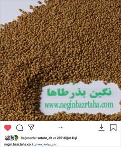 industry agriculture agriculture فروش انواع رقم های بذر یونجه تضمینی