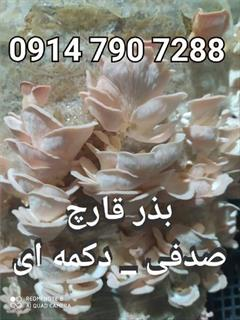 industry agriculture agriculture فروش بذر قارچ