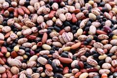 buy-sell food-drink nuts-dried-fruit فروش لوبیا چیتی در اصفهان