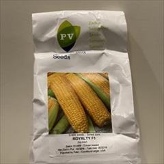 industry agriculture agriculture بذر ذرت رویال تی